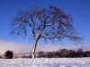 mf722-skipton-tree